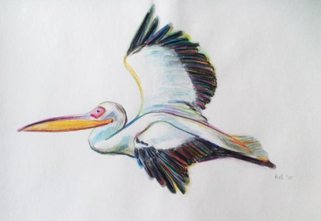 2015 Pelikan