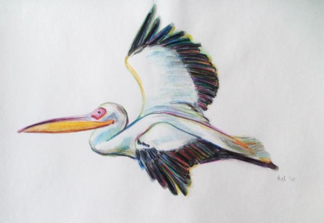 2015 Pelican_Melanie Franz