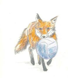Fox and ball