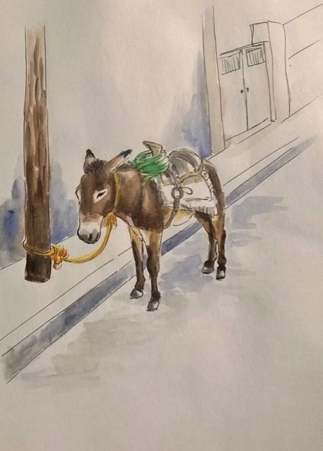 1804 Malinalco donkey_Melanie Franz