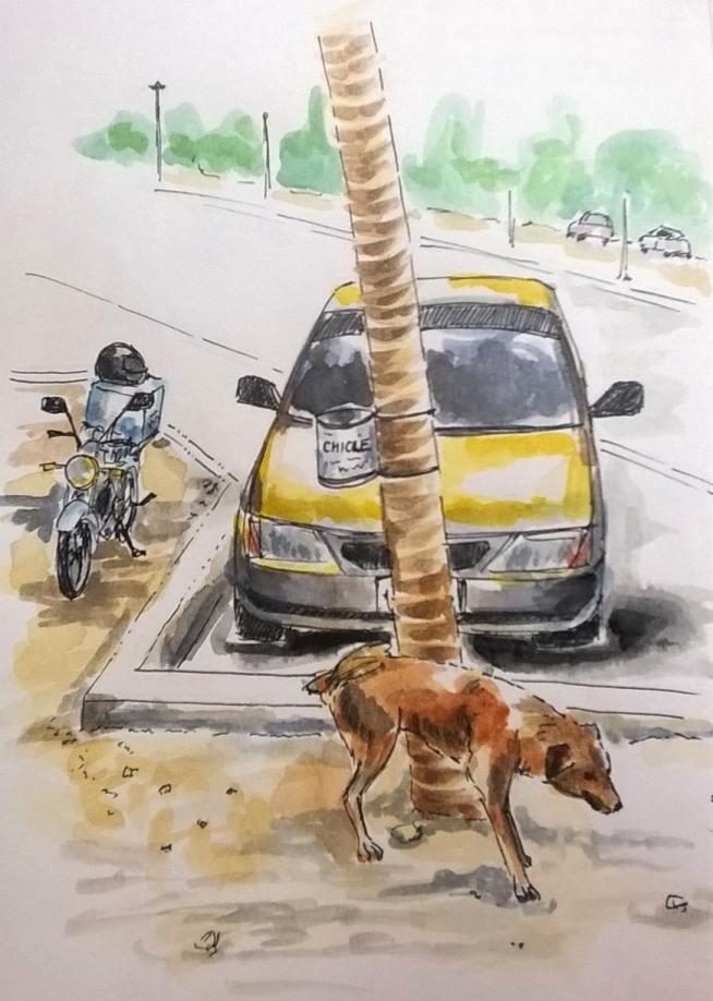 1803 Tulum dog by mel