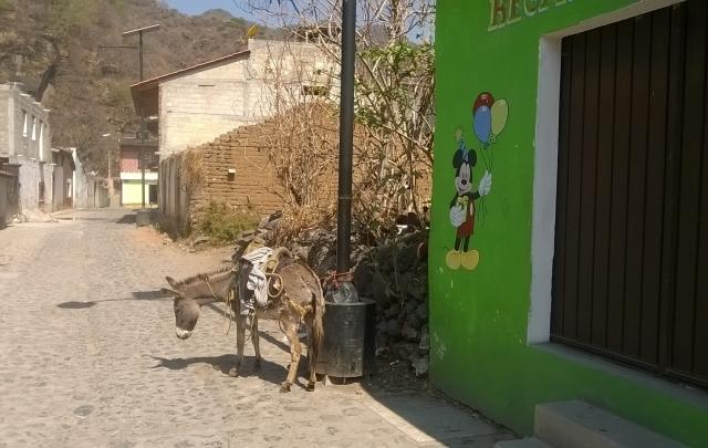 Donkey in Malinalco