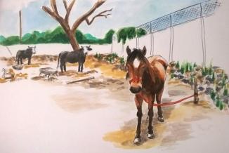 1804 Malinalco horse neighbour_Melanie Franz