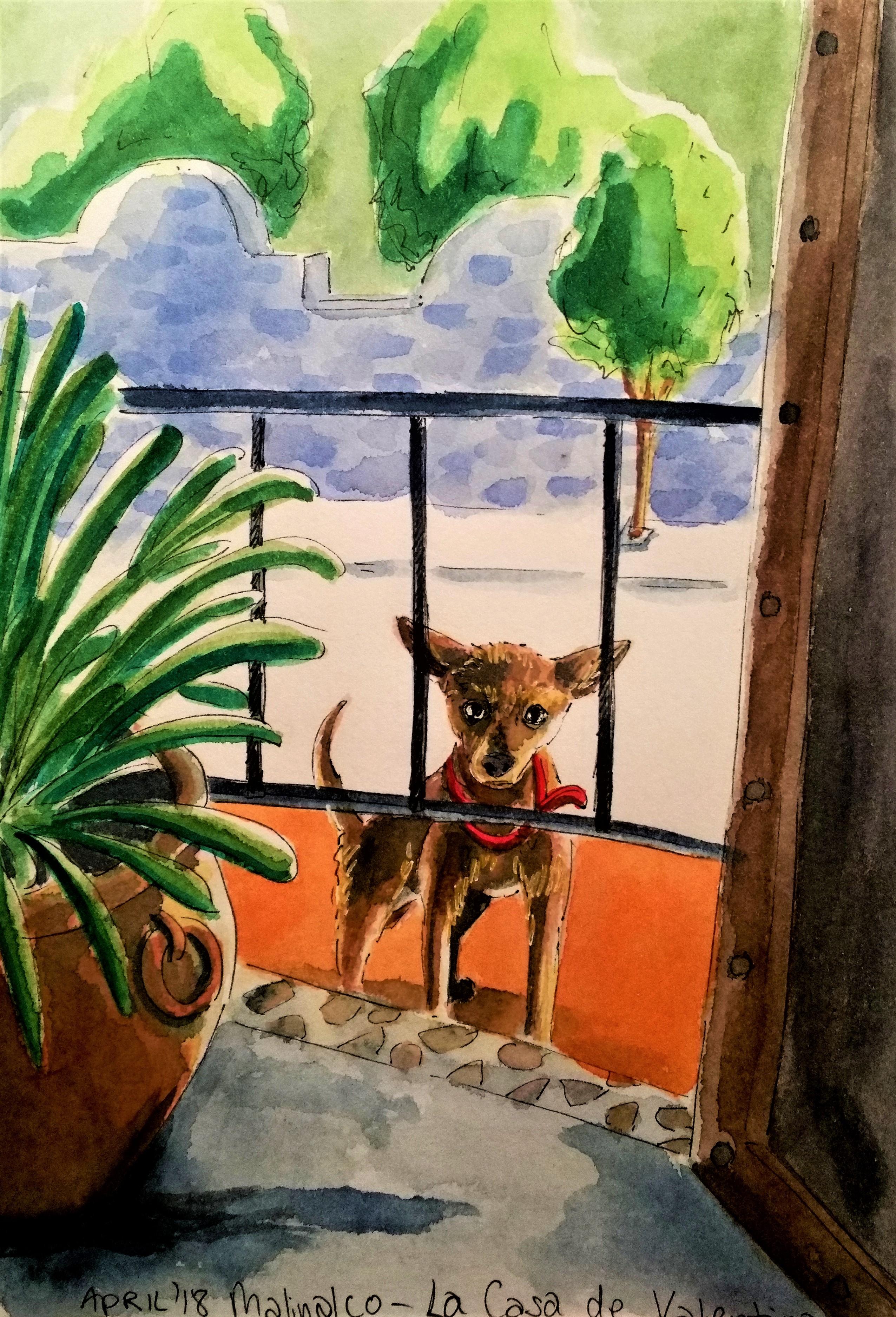190110 casa de valentina dog_Melanie Franz