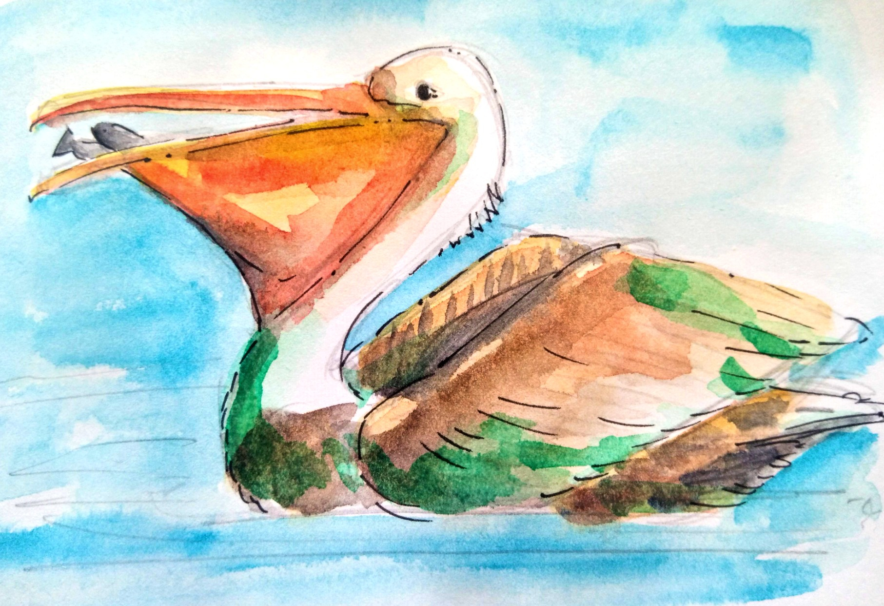 20_06-pelican-fish_Melanie Franz Watercolour