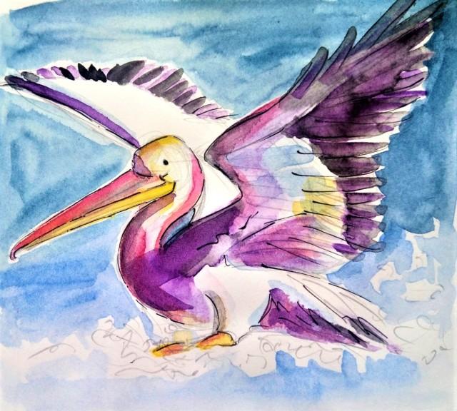 20_07 Pelican landing_Melanie Franz
