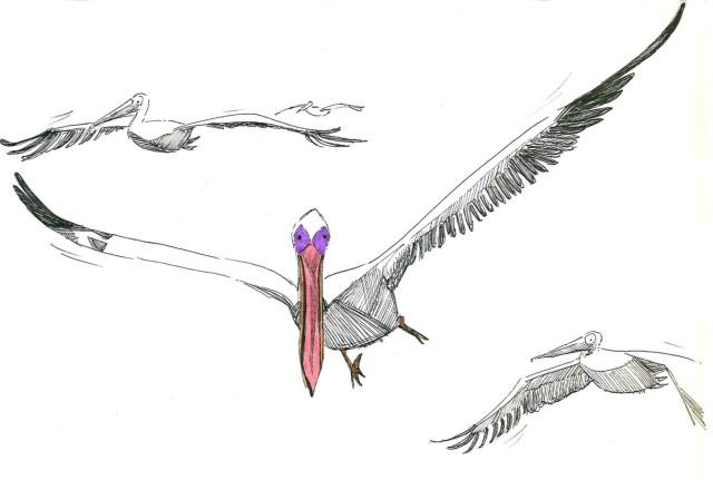 Flying Pelicans_Melanie Franz
