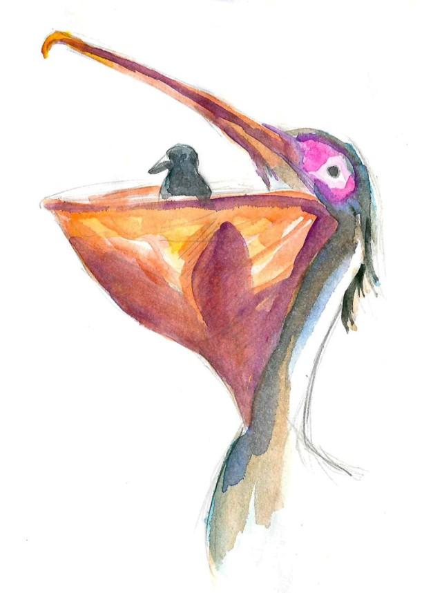 Pelican eats pigeon_Melanie Franz