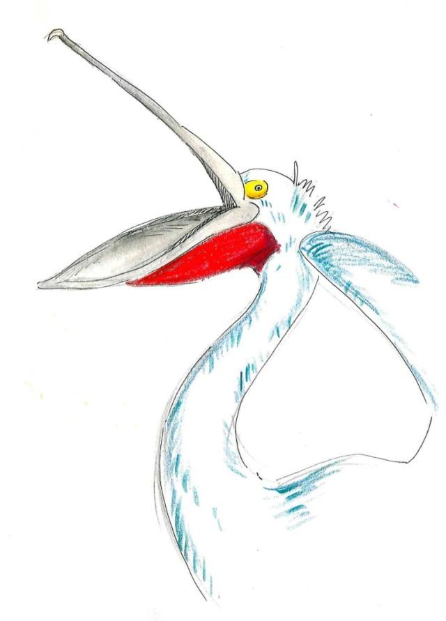Pelican scream_Melanie Franz