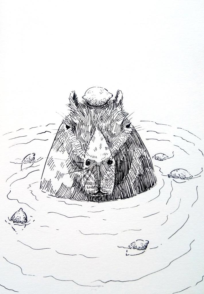 201006-inktober-rodent-capybara_Melanie Franz