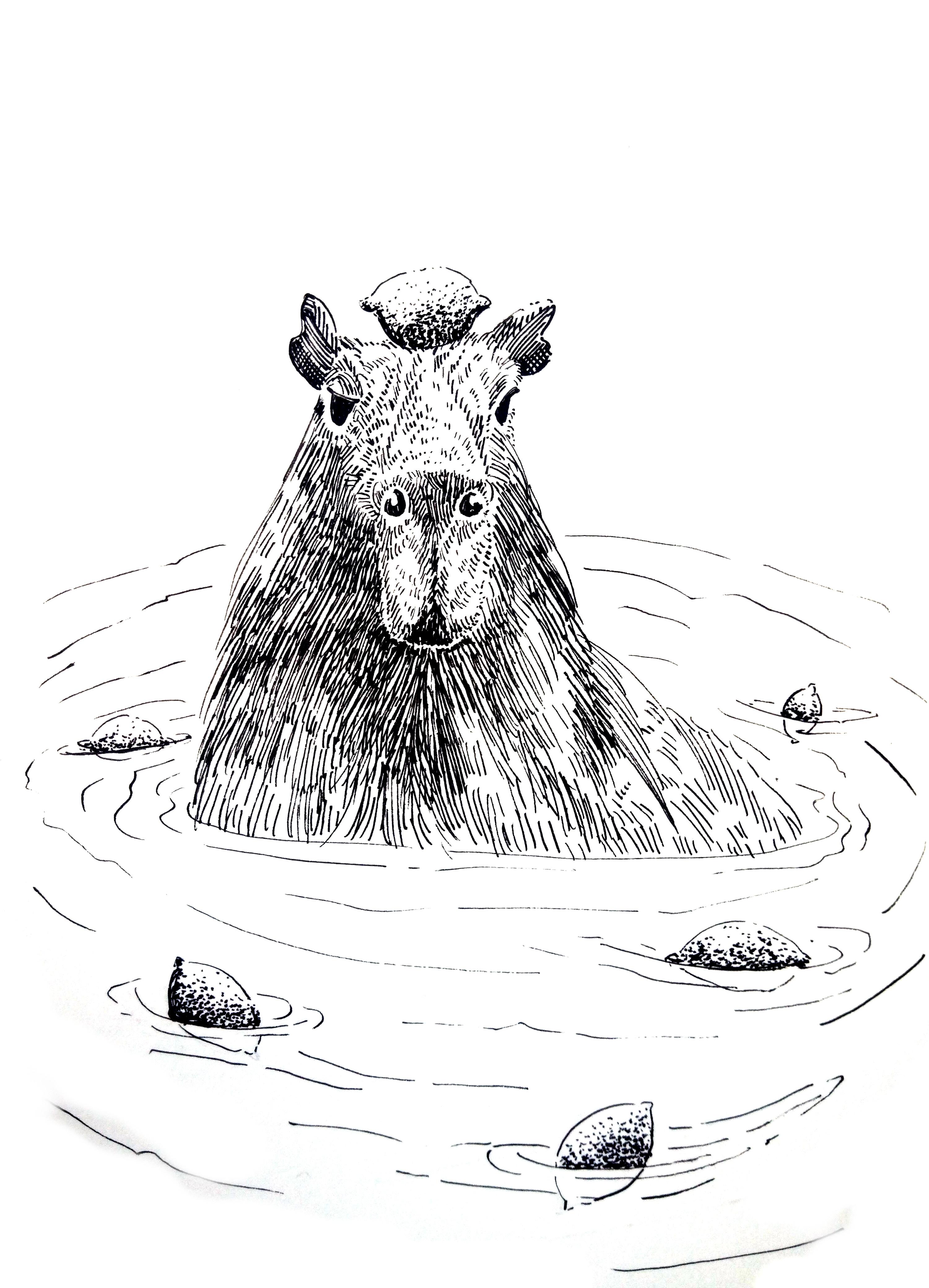 201218 Capybara Lemon_ Melanie Franz