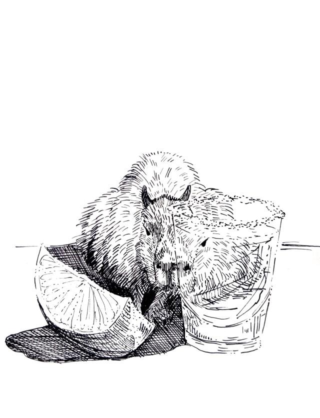 201226-capybara-ink-tequila_Melanie Franz