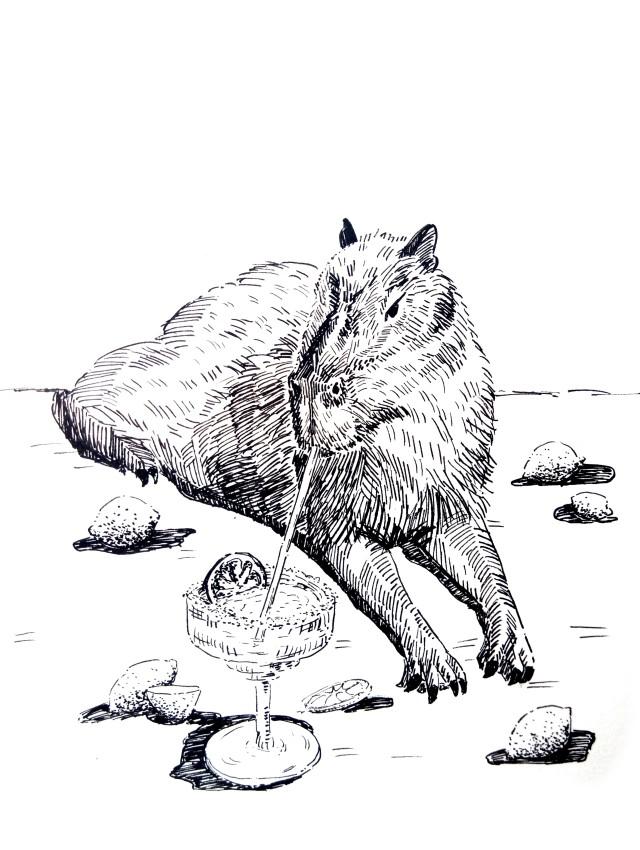 201226-capybara-margaritha_Melanie Franz