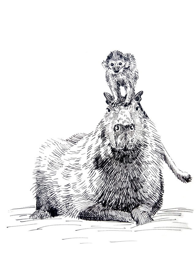 201226-capybara-monkey-ride_Melanie Franz