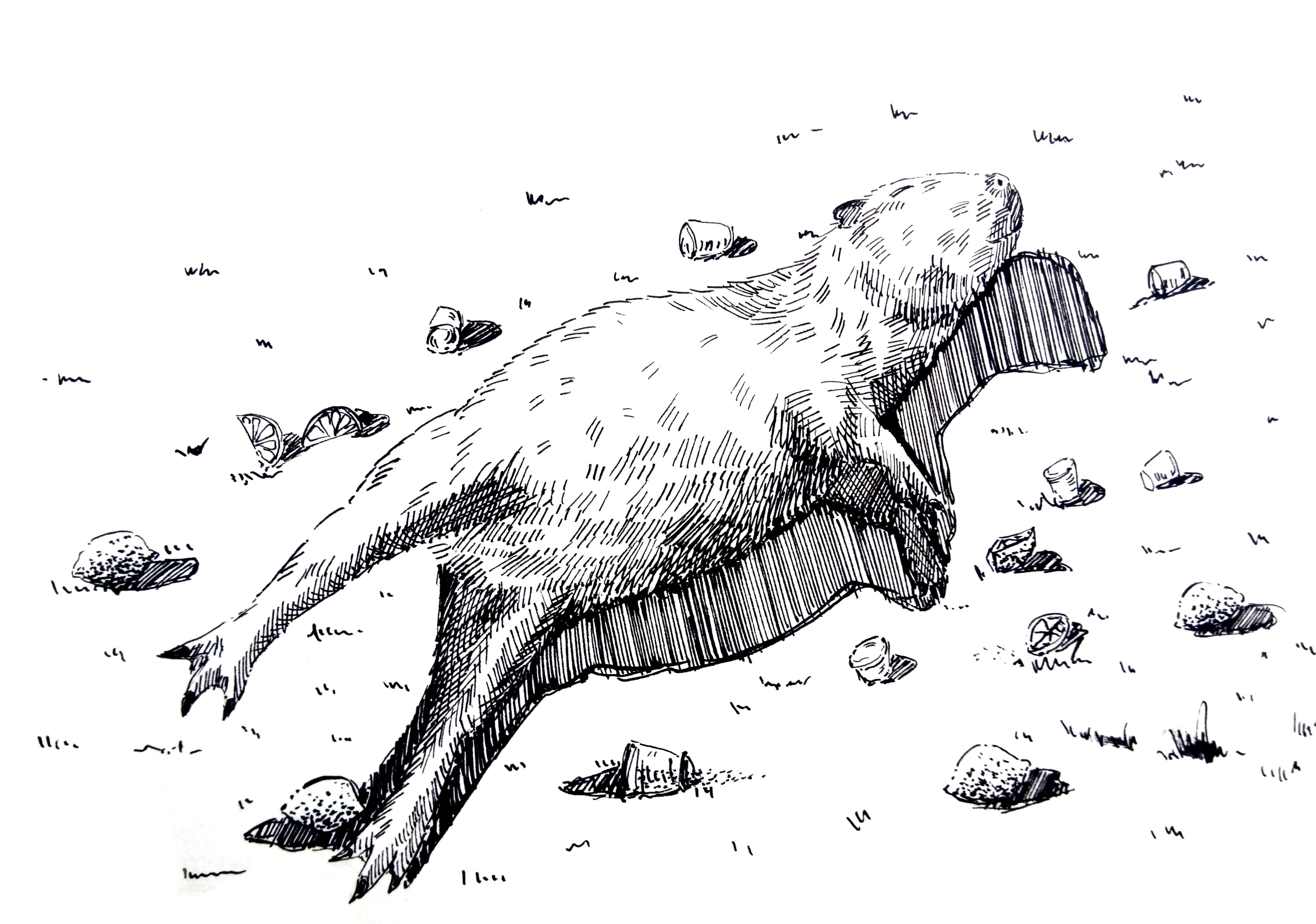 201226-capybara-tequila-Melanie Franz