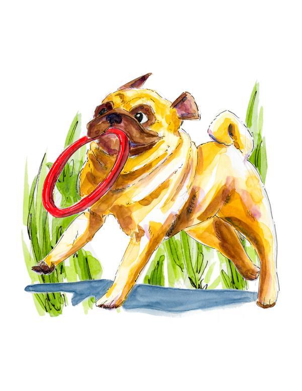 Kobbi pug running _ Melanie Franz
