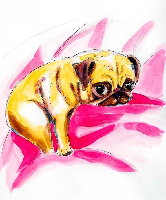 Pug Dog_Melanie Franz
