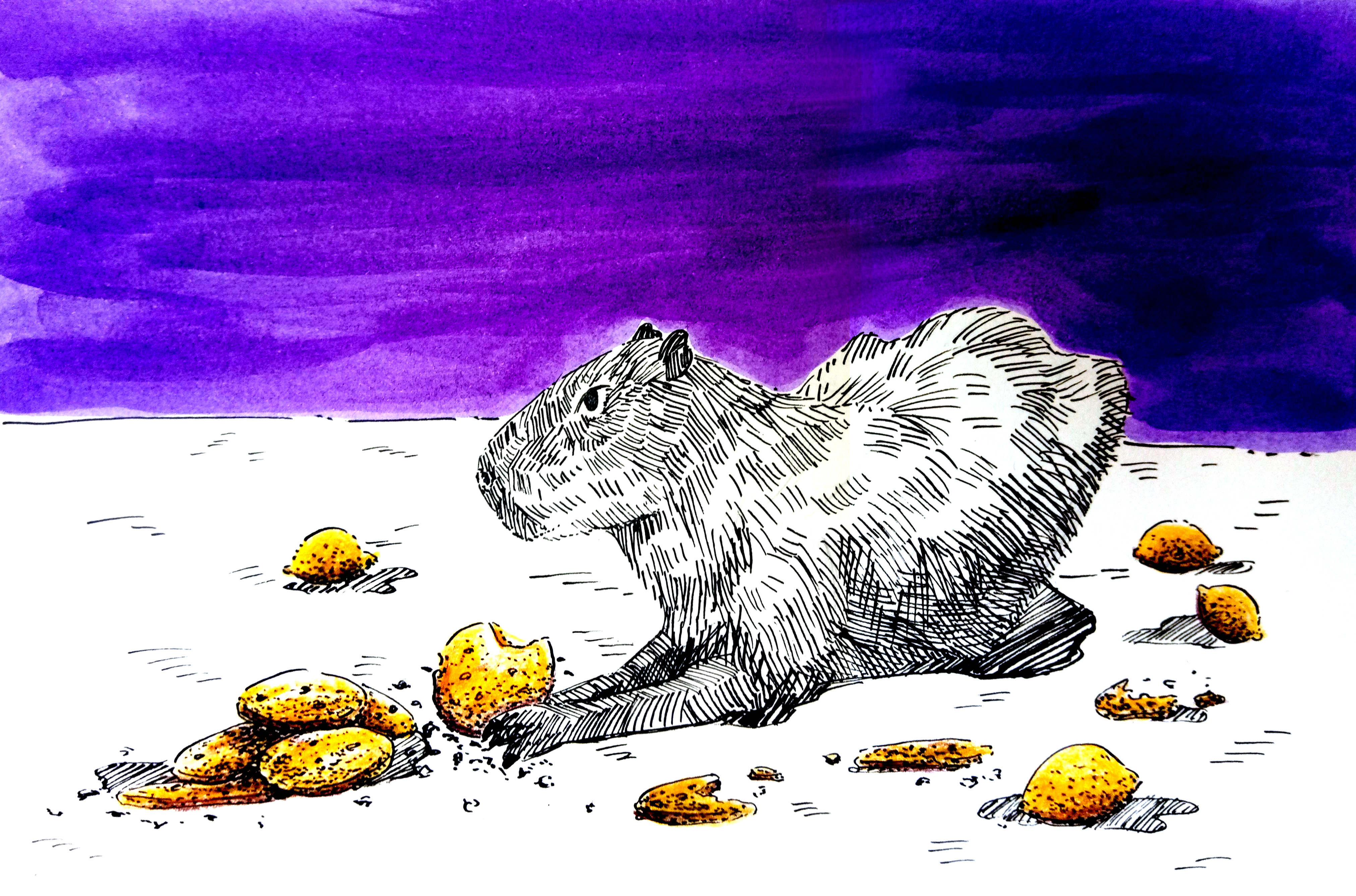 210105 Capybara Lemon Cookies_Melanie Franz