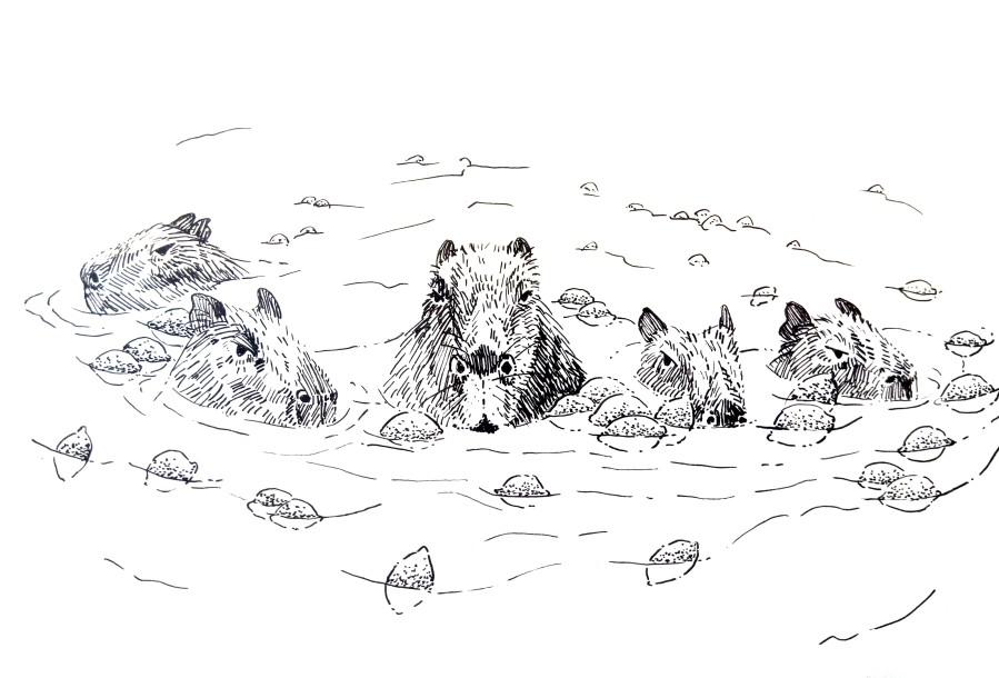 210106 Capybara Pool party wiht lemons_Melanie Franz