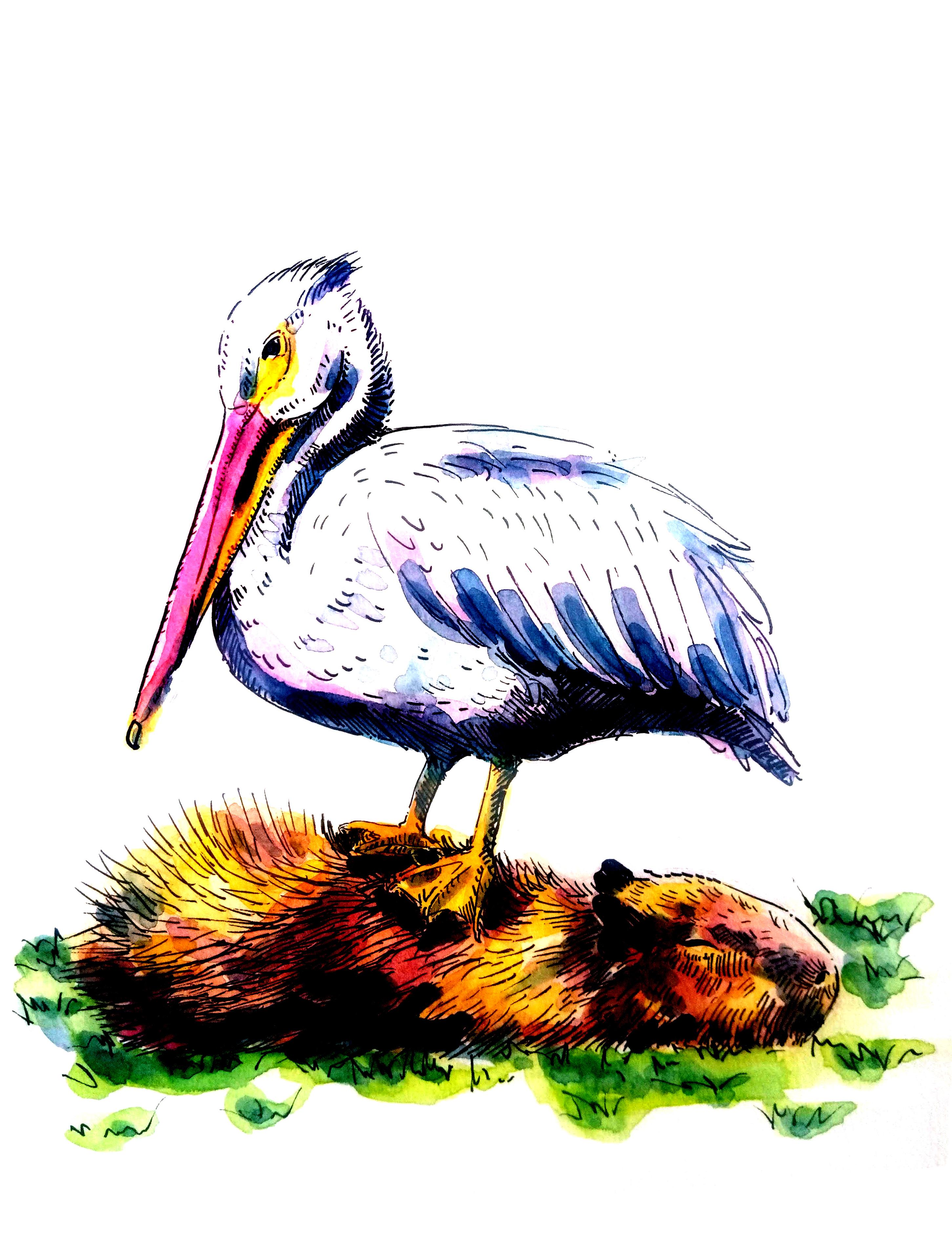2104-capybara-pelican_Melanie Franz