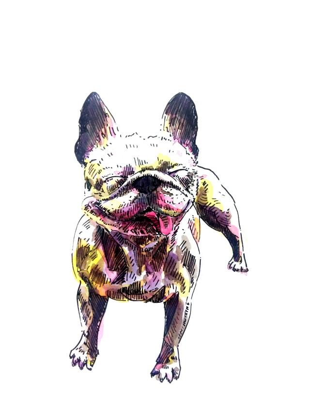 210519-french-bulldog_Melanie Franz