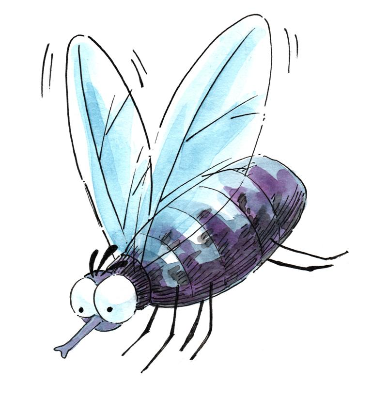 little fly_Melanie Franz