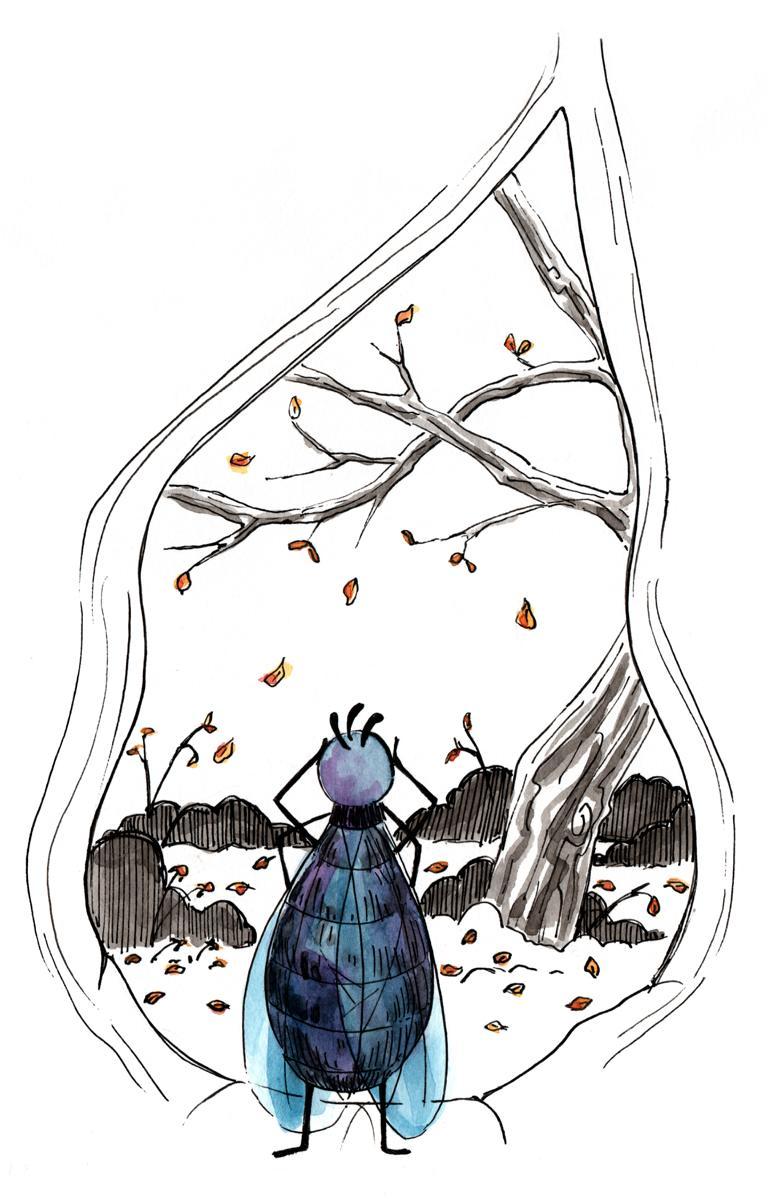 Fly in her tree_Melanie Franz