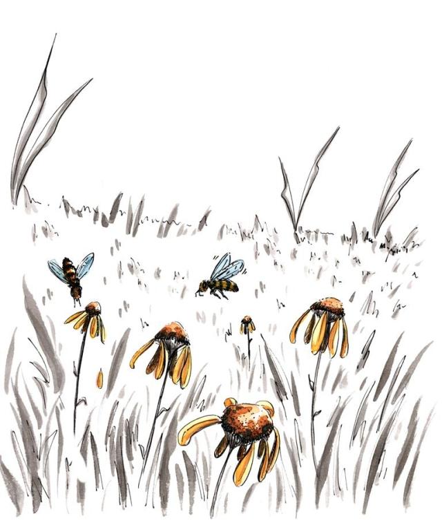 Fly garden autumn bees_Melanie Franz