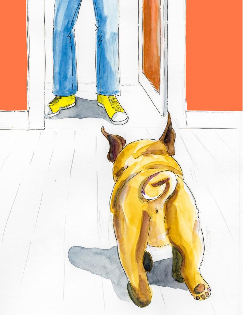 Pug running to door_ Melanie Franz