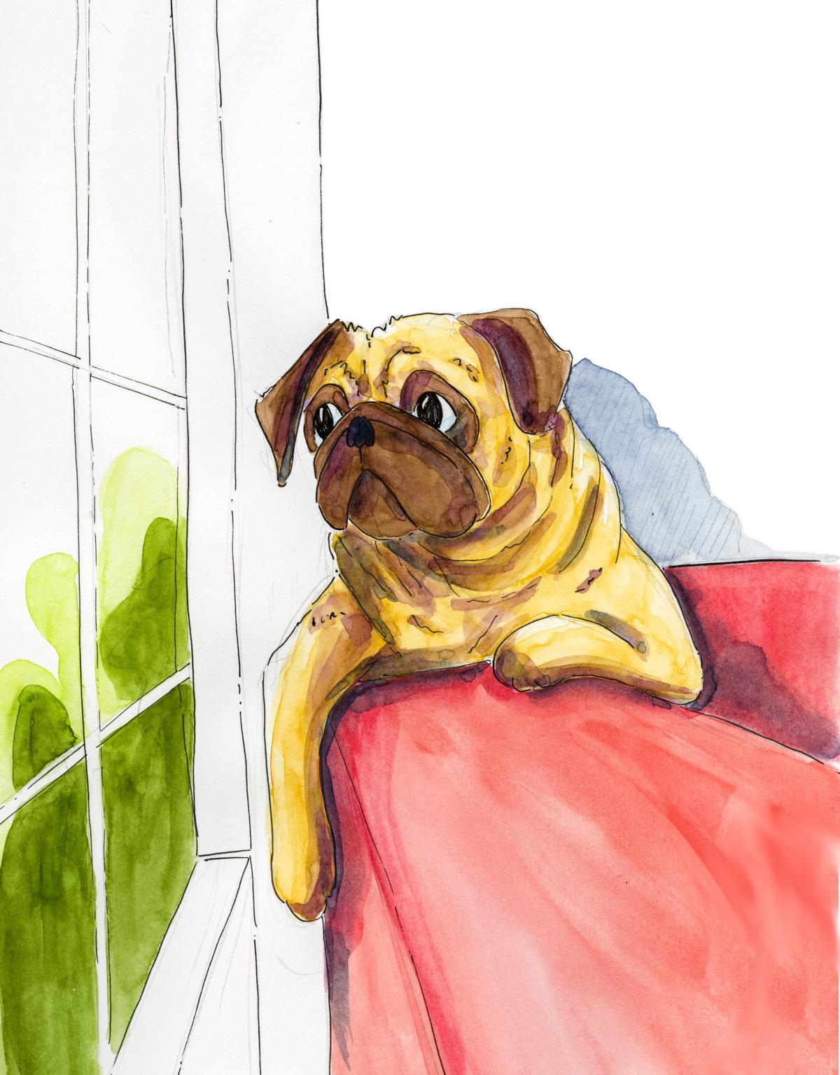 Pug looking out of window_Melanie Franz